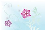 photo wallpaper - flowers